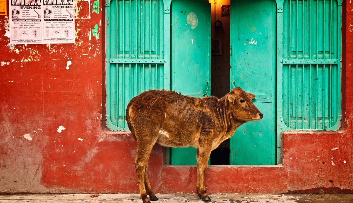 Anne Marie's Blog – Animal Sanctuary in India