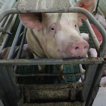 Animal Welfare – Let's Keep up the Pressure