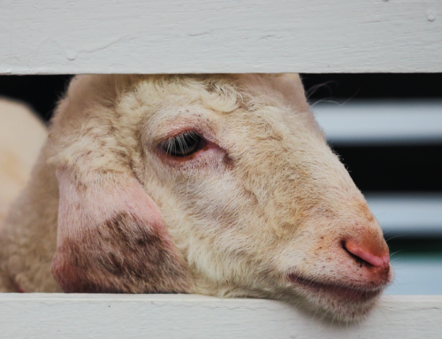 SPECIAL REPORT: The Animal Justice Project